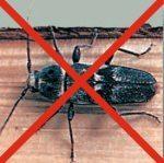 remmers anti insekt holzwurmbek mpfung holzschutzmittel. Black Bedroom Furniture Sets. Home Design Ideas